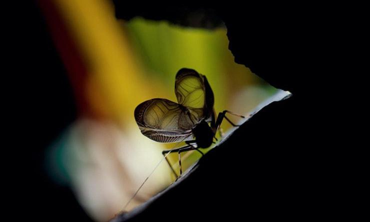 どうして昆虫は鳴くの?『プチペディア』で迫る、 昆虫・植物・動物のヒミツ
