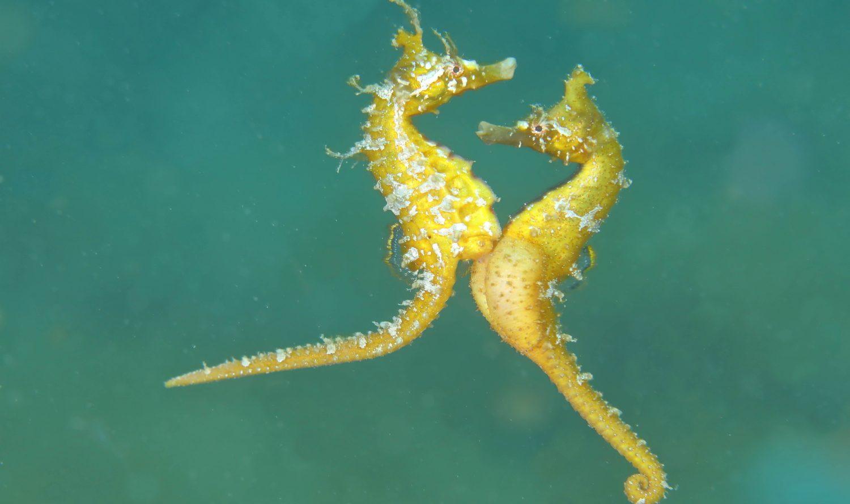 仲むつまじい新種の魚、ヒメタツのひみつ