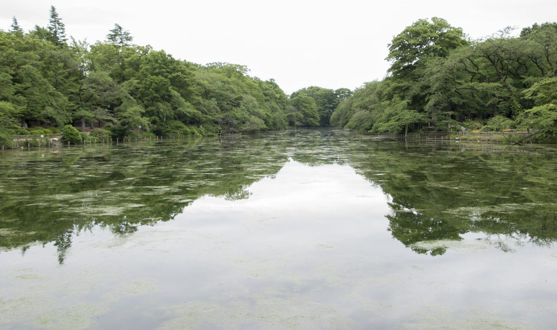 池の水をすべて抜く 本当に正しい方法。