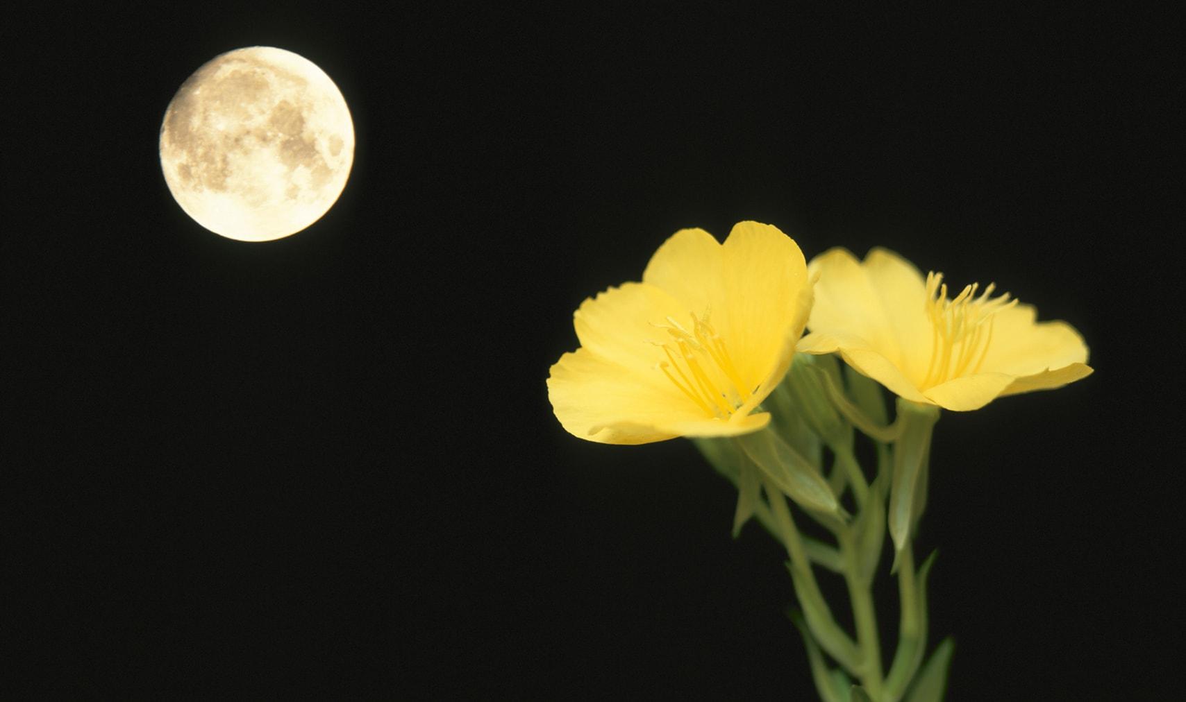 夜にひっそり花が咲く植物のナゾ