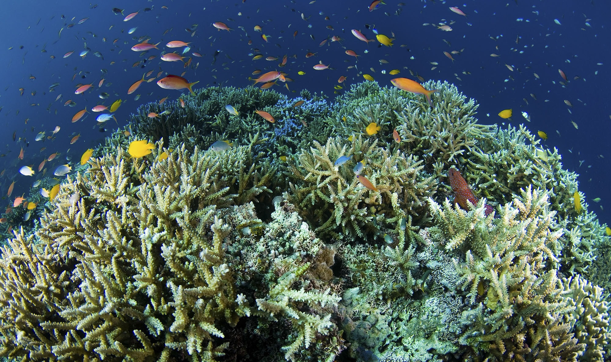 橋を守る技術は、サンゴも救えるか