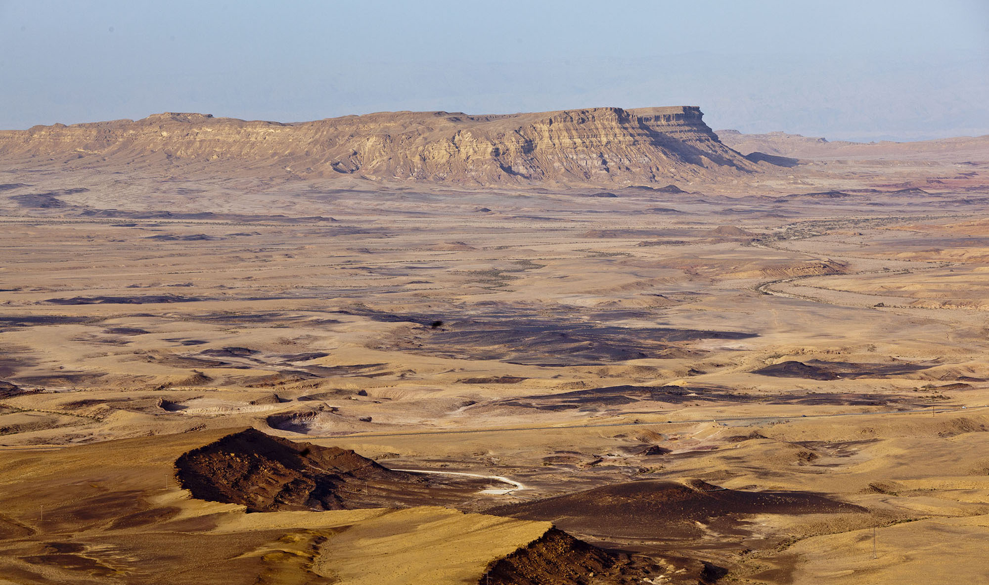 図鑑制作者のおしごと② ネゲブ砂漠で出会った生きものたち