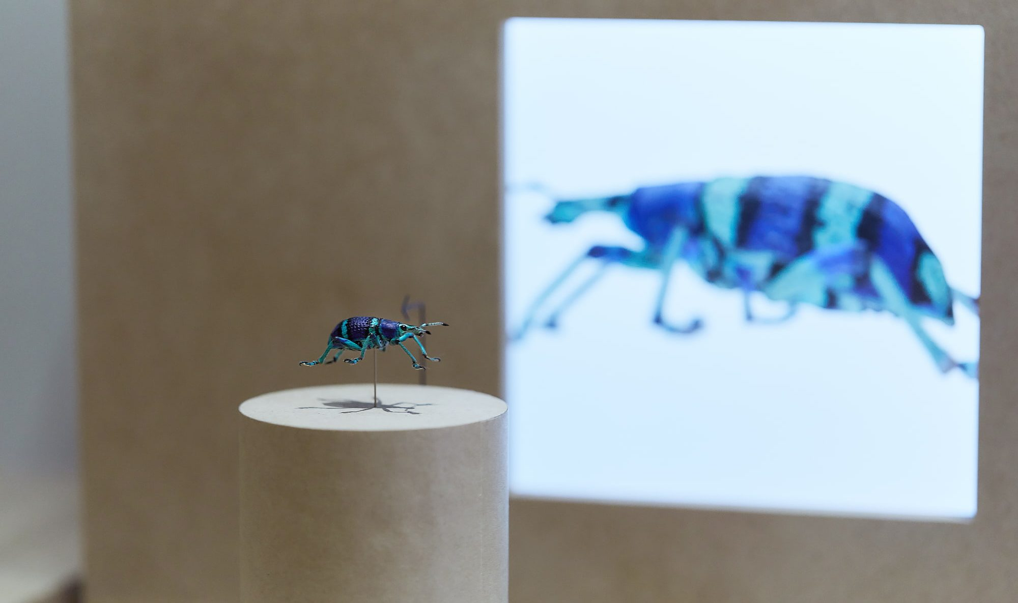 デザインの視点で、 虫と自然を捉え直す