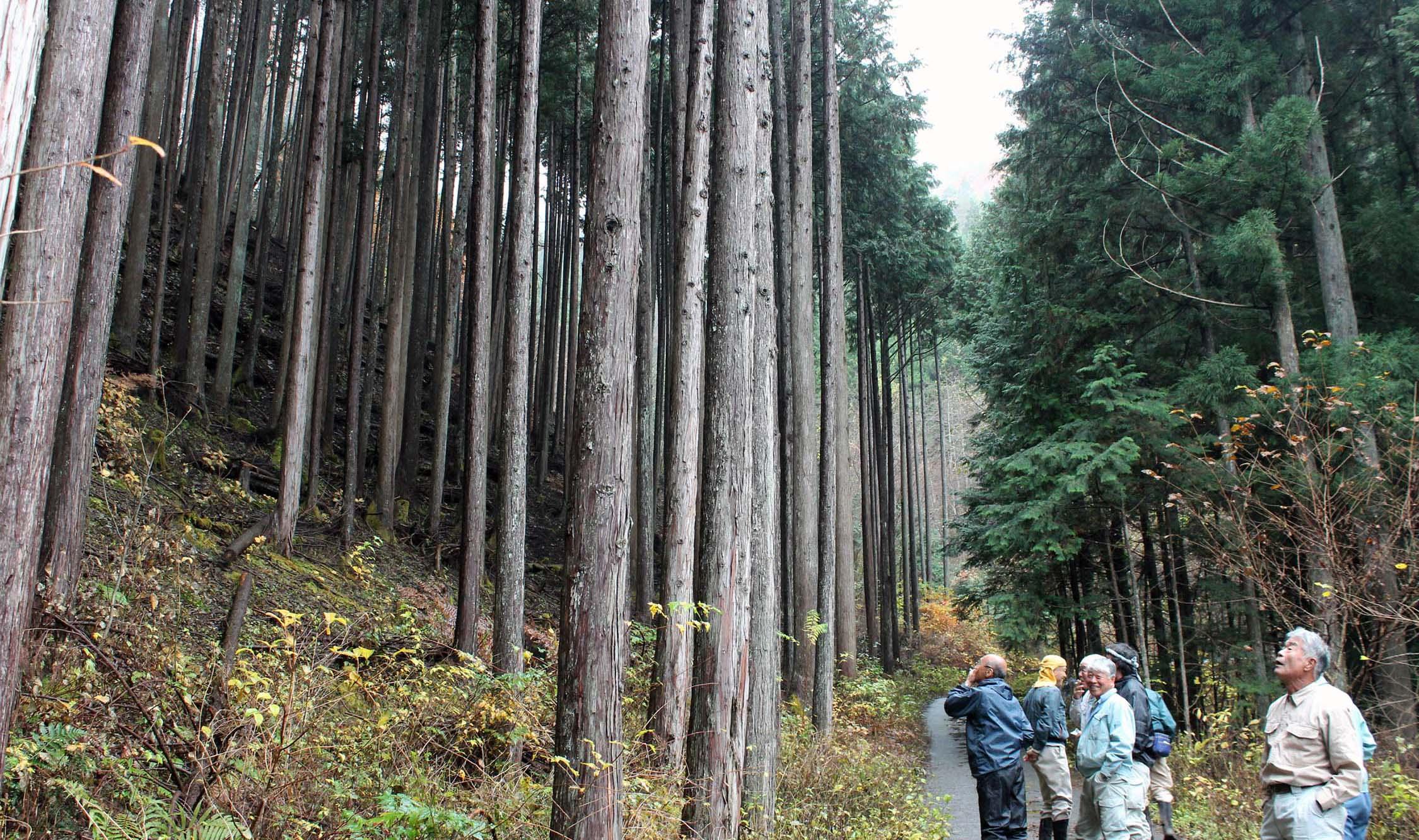 東京の水源となる森をたずねて