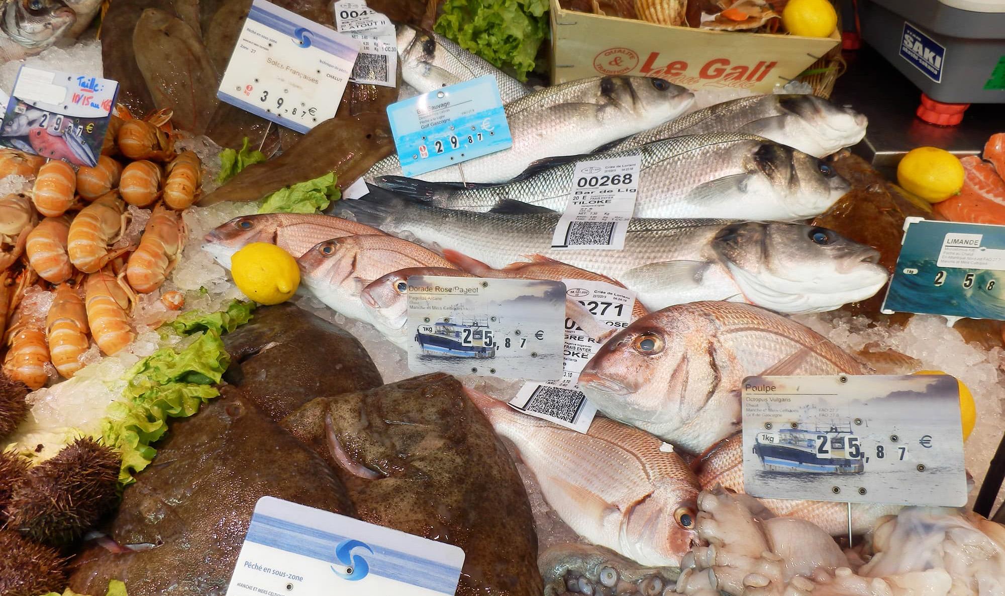 量から質へ。 魚の価値を上げる技法