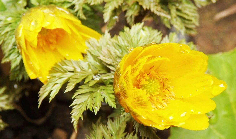 花と自然の鎌倉さんぽ「2月 如月」