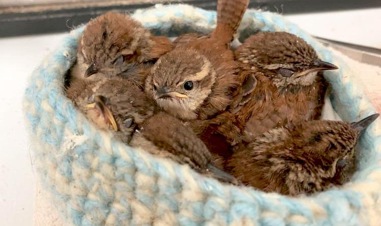編み物が鳥を助け、世界を広げる