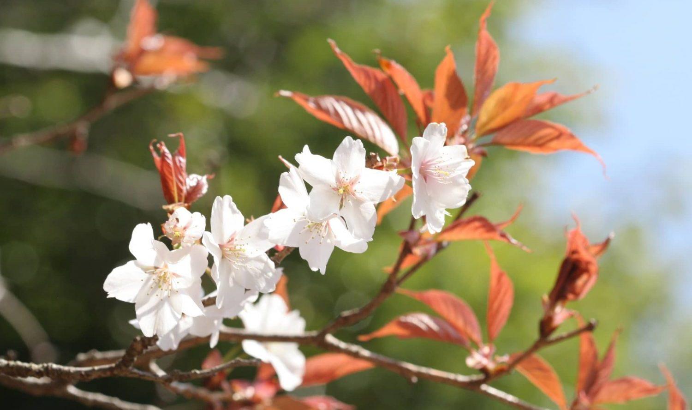 花と自然の鎌倉さんぽ「4月 卯月」