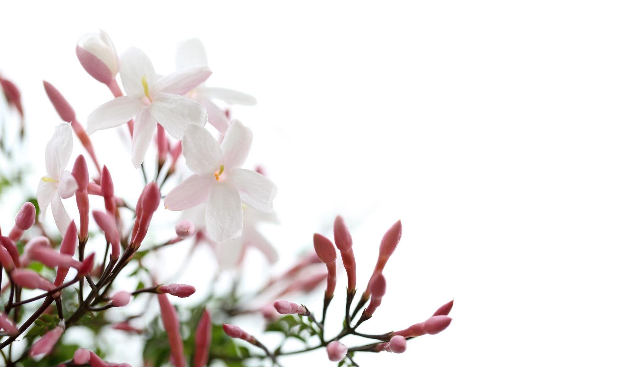 花にいろいろな 色や形がある理由