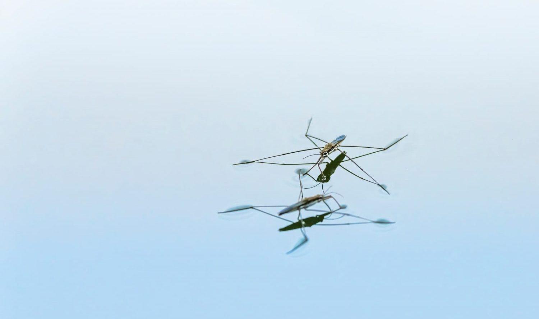 アメンボが水の上を移動できる仕組み