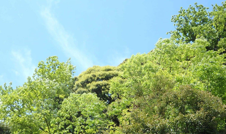 花と自然の鎌倉さんぽ「5月 皐月」