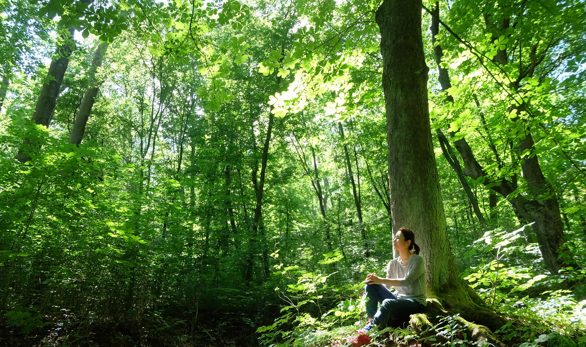 心をひらく 森林浴