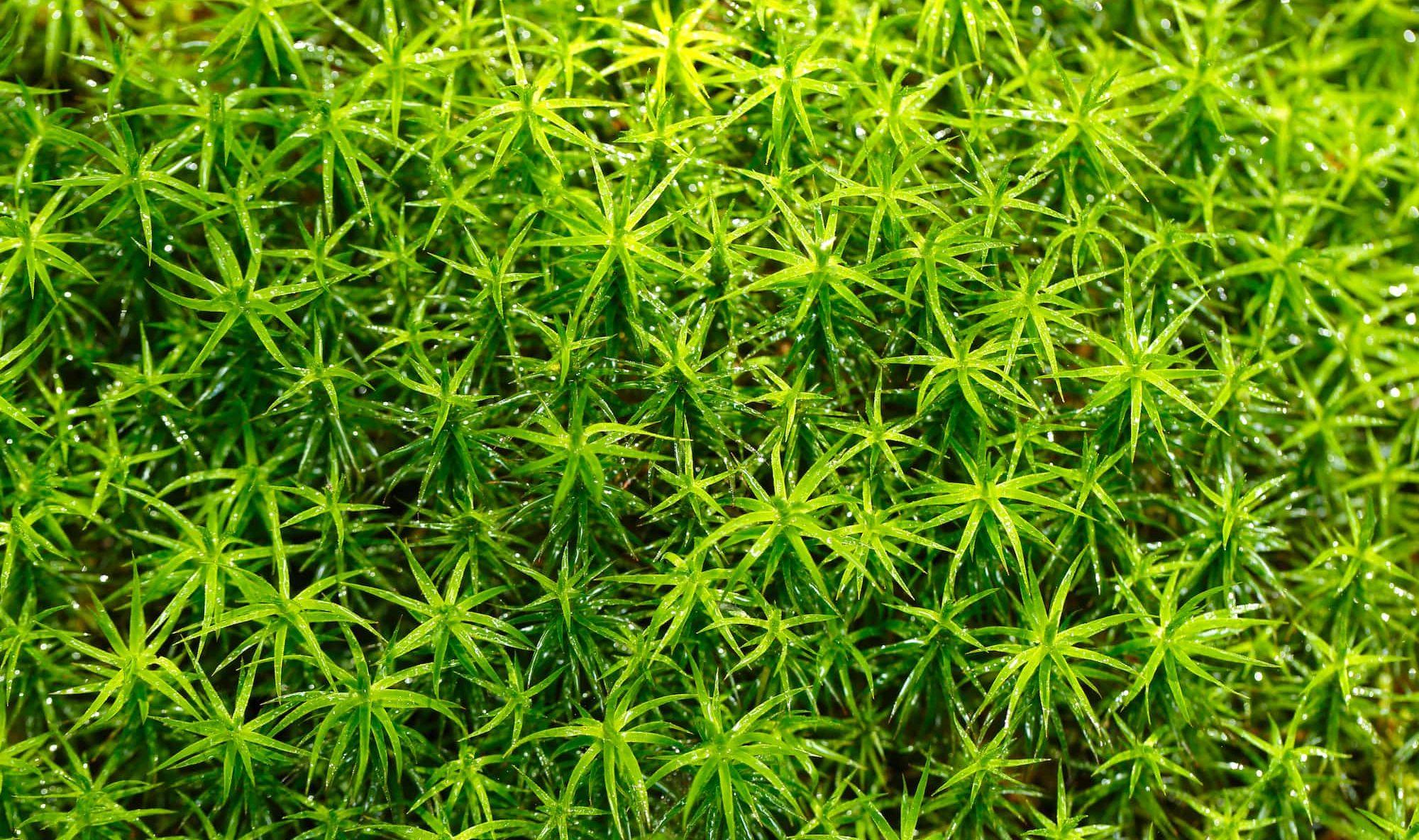 コケは、植物の仲間?