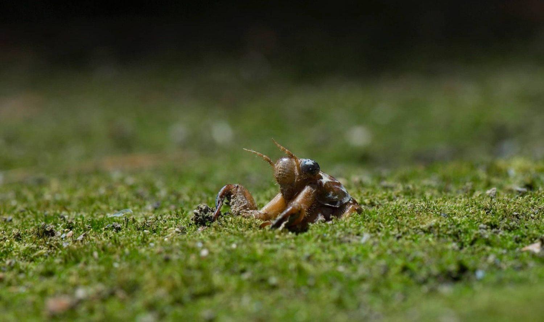 セミの幼虫は 土の中に何年いる?