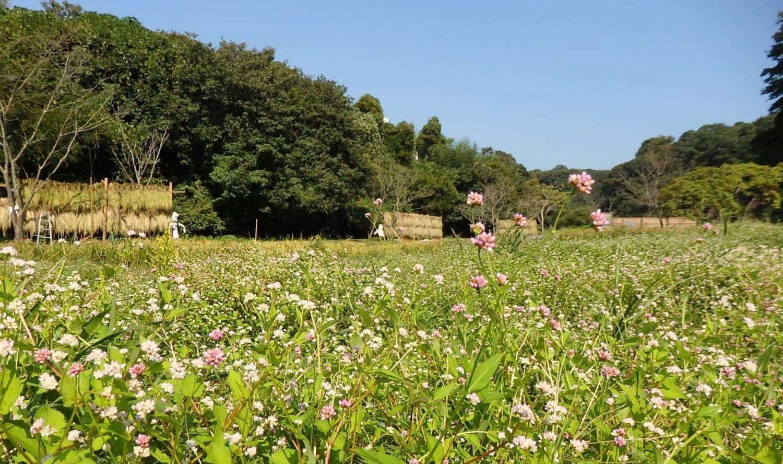 花と自然の鎌倉さんぽ「10月  神無月」