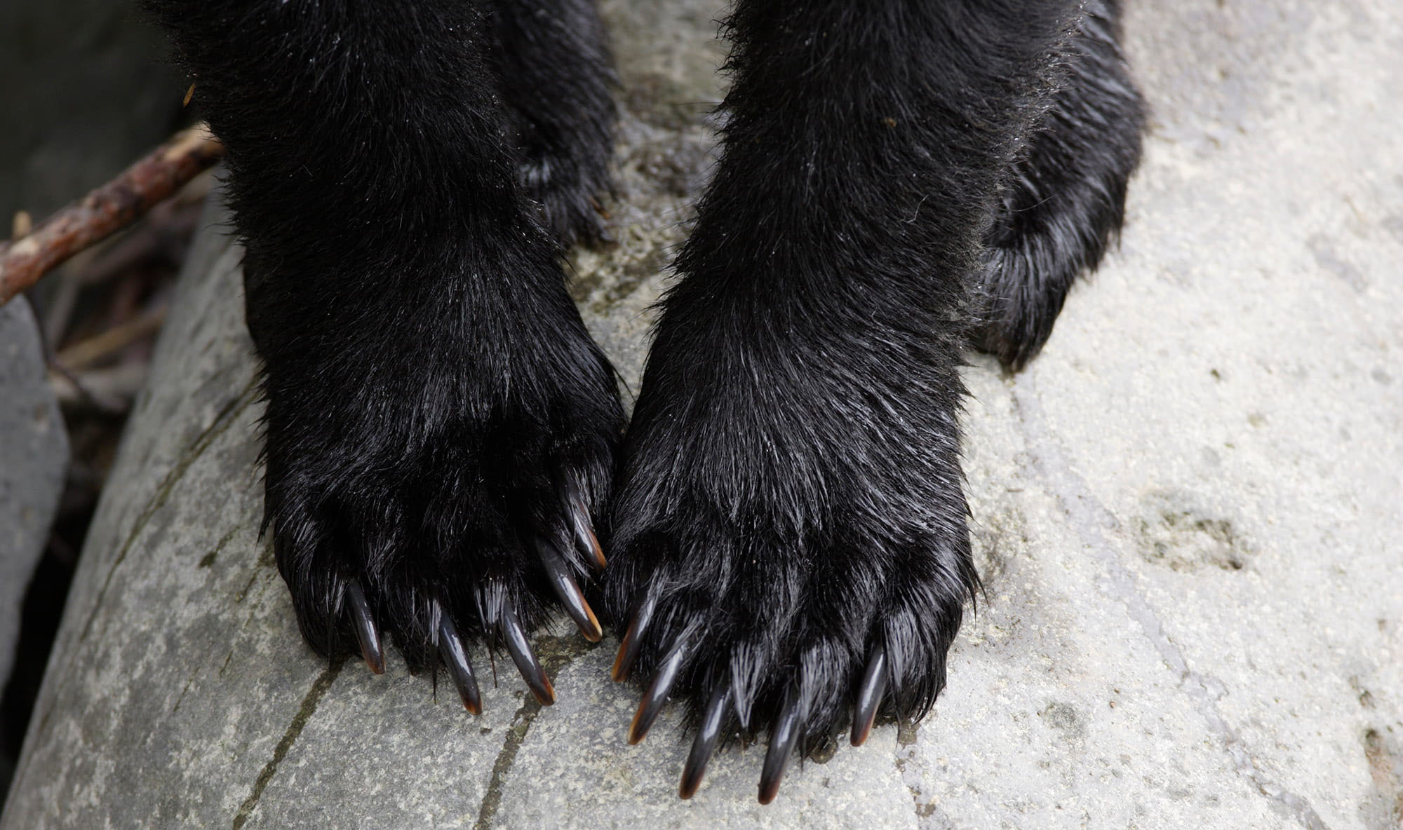 獣と人の境界をめぐる困難